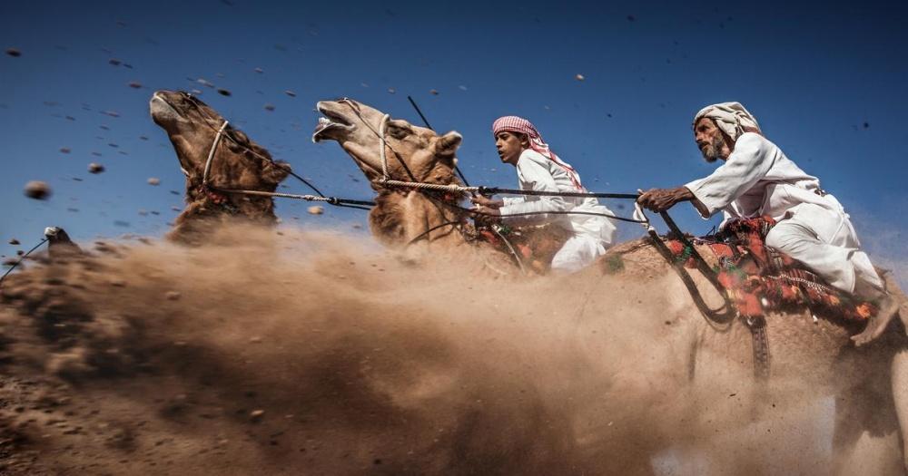 Гонки на верблюдах