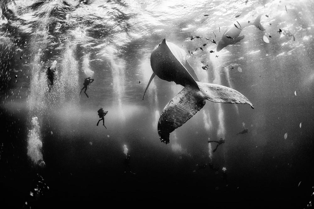 Шепот кита