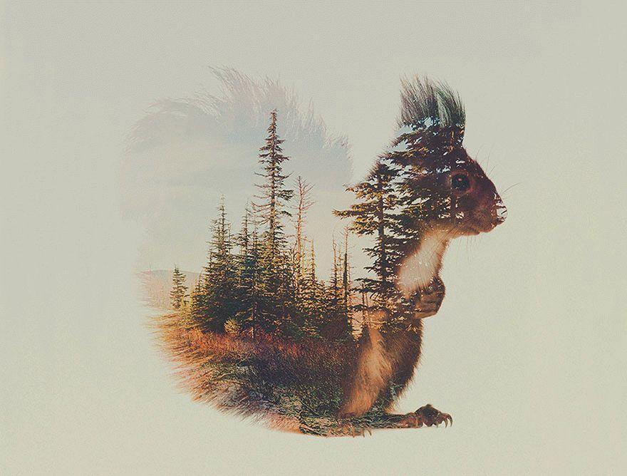 forest-inside-lastmag-08