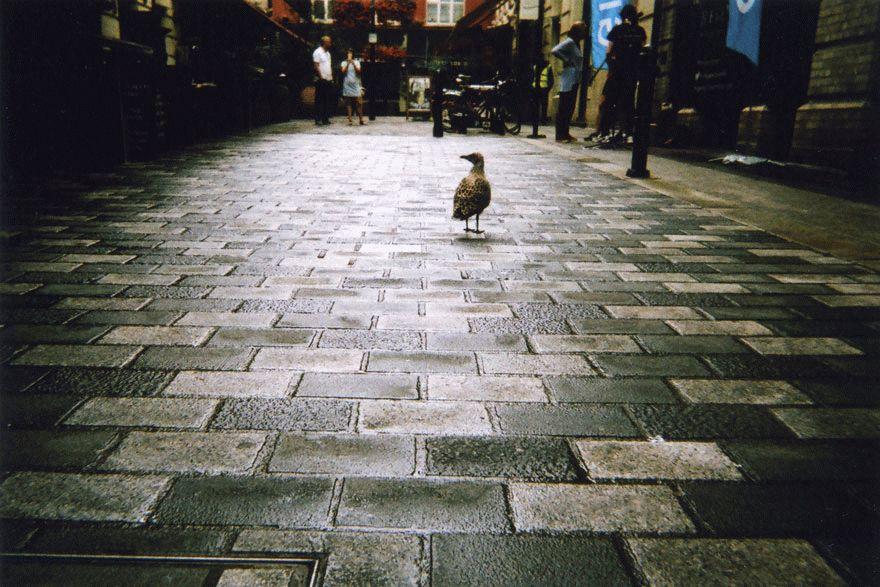 my-london-10