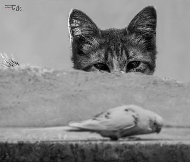 Фото: Mohamed Treki