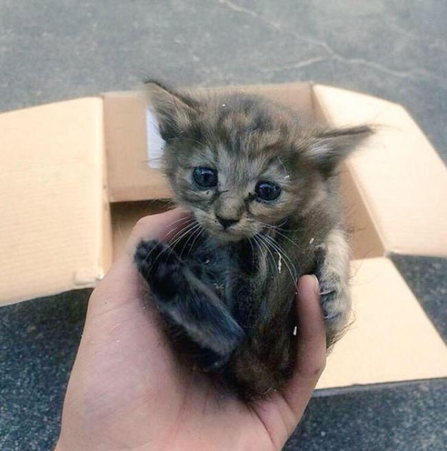rescue-kitten-komari-ferret-brothers-01