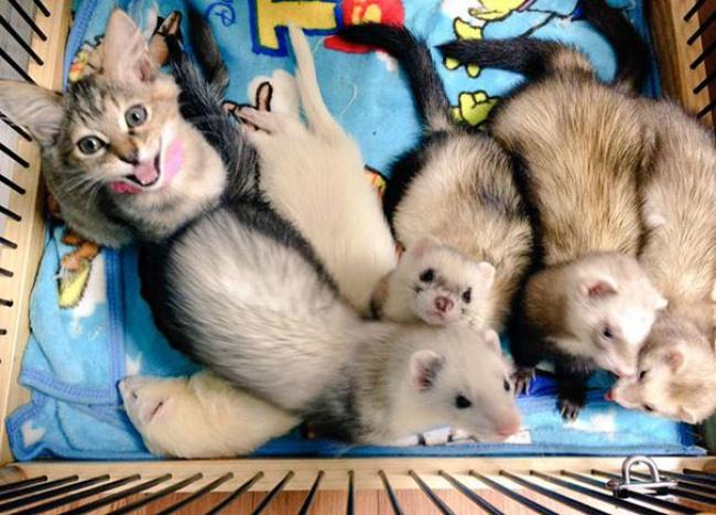 rescue-kitten-komari-ferret-brothers-02
