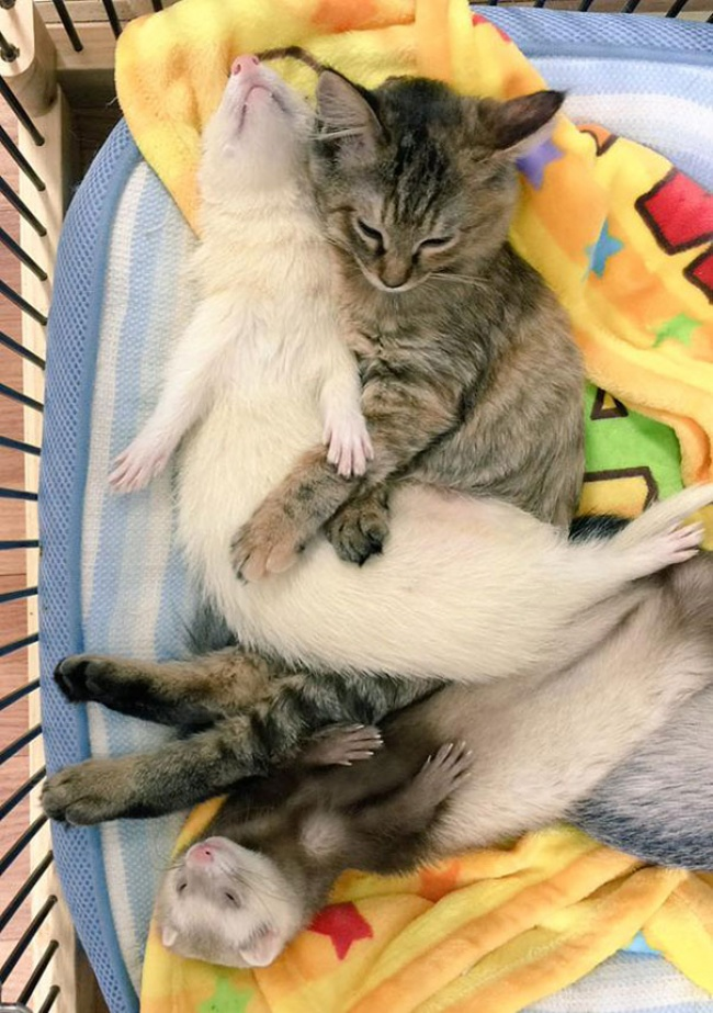 rescue-kitten-komari-ferret-brothers-03