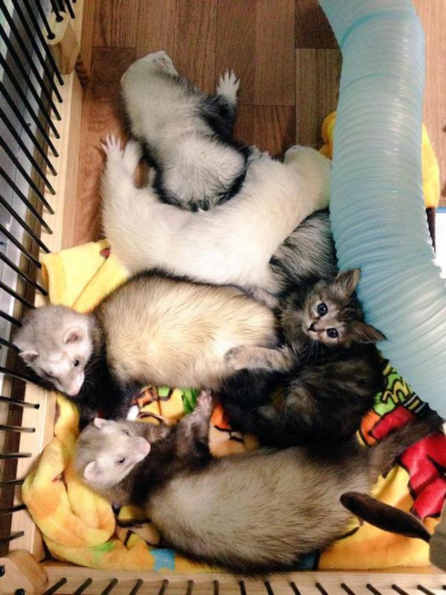rescue-kitten-komari-ferret-brothers-04