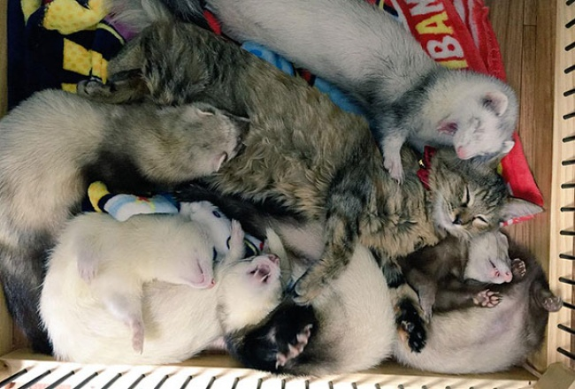 rescue-kitten-komari-ferret-brothers-07
