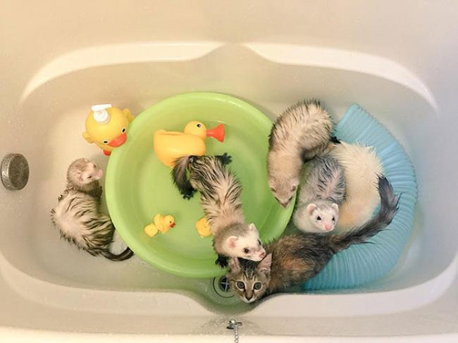 rescue-kitten-komari-ferret-brothers-09