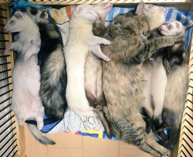 rescue-kitten-komari-ferret-brothers-10