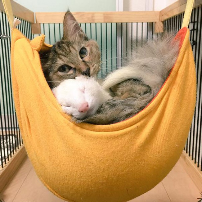 rescue-kitten-komari-ferret-brothers-12