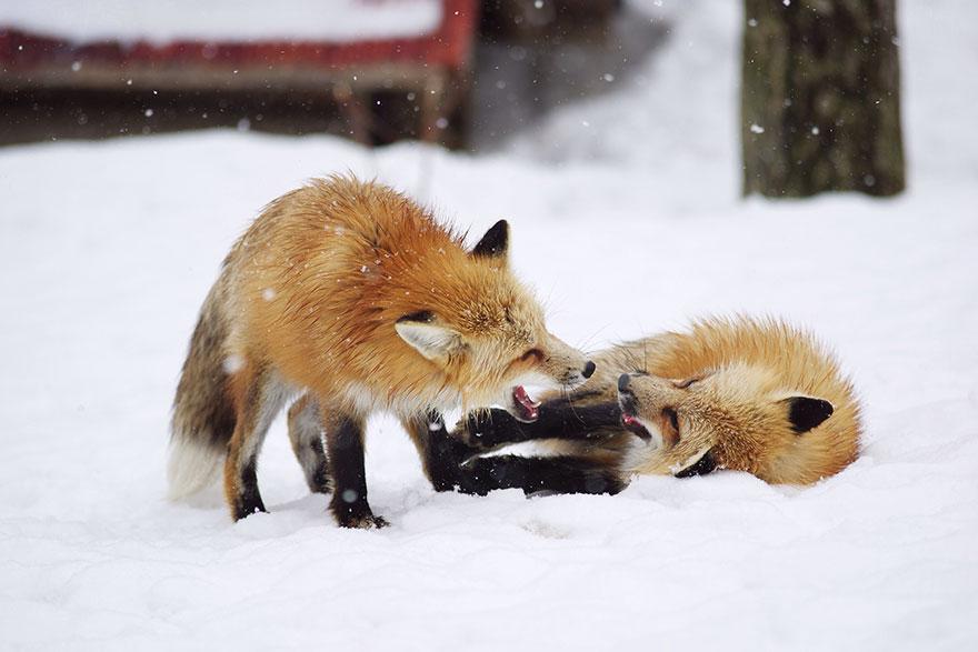 FoxVillage-14