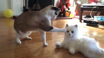 Реакция кота на робота