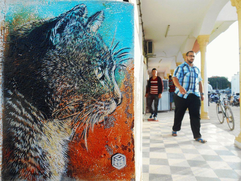 C215-cats-lastmag-01